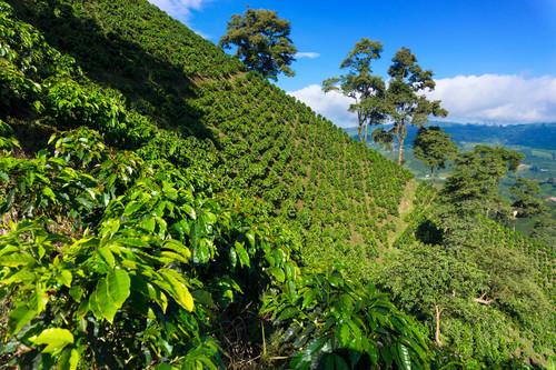 Piantagioni caffé, Colombia
